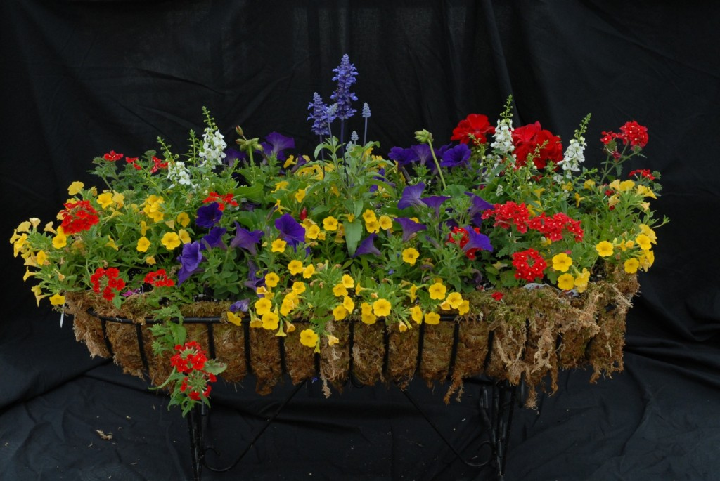 Creating Beautiful Container Gardens
